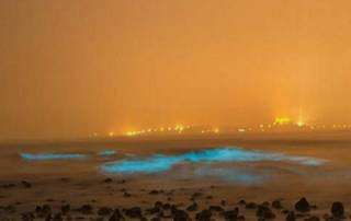 Head to Juhu Beach in Mumbai and spot 'Blue Waves' for the first time