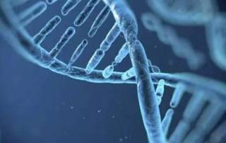Genes may affect stress fracture injuries: study