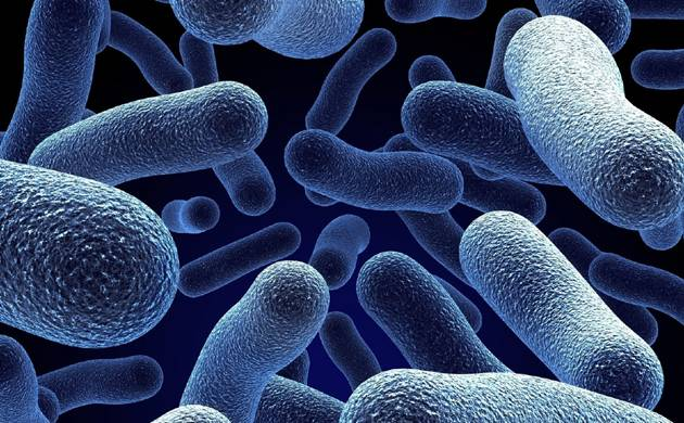 Bacteria (Representational picture)