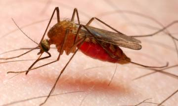 ICMR, Sun Pharma, MP govt. join hands together for a malaria free India