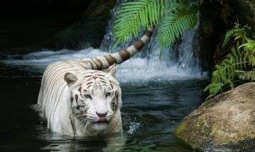 275 zones around wildlife sanctuaries in India declared eco-sensitive