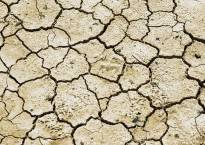 357 mandals declared drought-hit in Andhra Pradesh: Minister