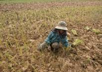El Nino droughts may get even worse in Asia as fear looms of sister La Nina