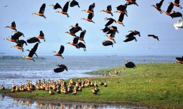 Draft Wetland Rules 2016: Assam wetlands may lose protection, environmentalists worried