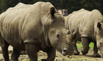 World Environment Day: Need of the hour is to save illegal trade in wildlife