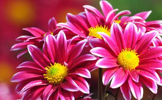Global warming: Flowers losing their diverse fragrances