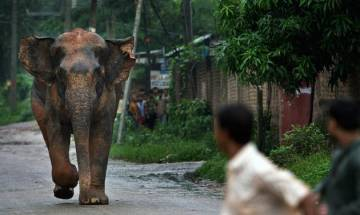 Wild elephants killed 108 people in West Bengal in 2015-16, says Forest Department