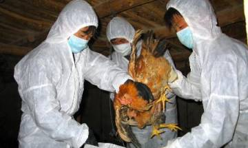 Delhi Govt issues health advisory: What to do and not to do during bird flu scare