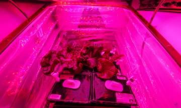 International Space Station plants Lettuce in space using Veg-03 experiment: NASA