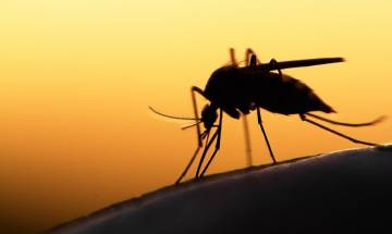 Death due to mosquito bite an accident, liable for insurance claim: Commission
