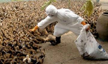 700 birds to be culled amid bird flu scare