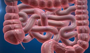 Good News! Appendix playing safe, may serve as reservoir for beneficial gut bacteria