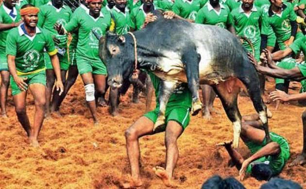 Jallikattu: PETA requests President, Centre not to pass ordinance on the sport