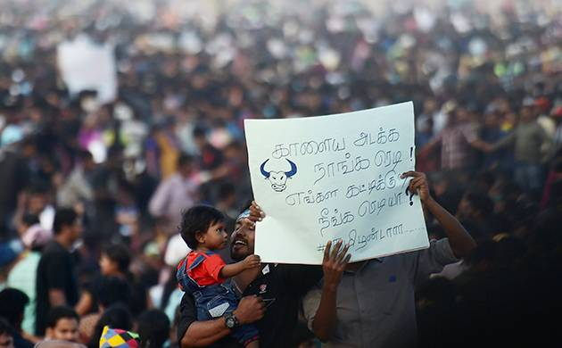 Anti-social elements crept into pro-Jallikattu protests in Chennai: Police (PTI Photo)
