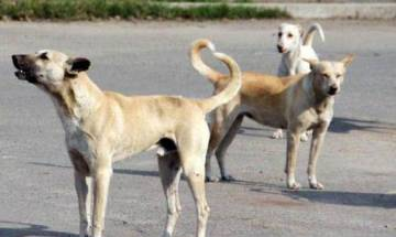 Video: Dog brutally beaten up to death by DTU guard, case registered in Delhi's Rohini