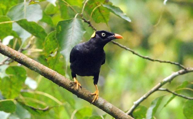 Birds (Image: PTI)