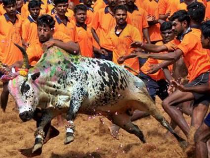 47 injured in Jallikattu conducted in Tamil Nadu's Thanjavur