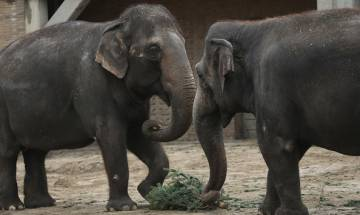 Unique methods to keep elephants away from human settlements in Odisha