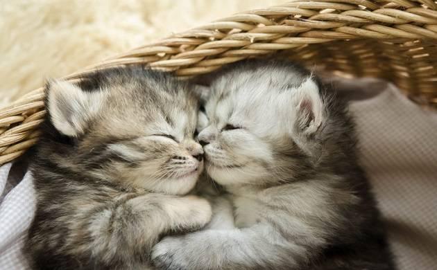 US-based perfume company develops 'Kitten Fur' perfume