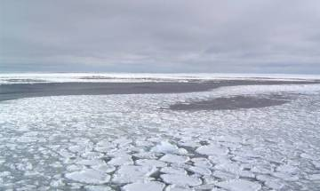 Algae blooms in Arctic as thinning ice lets in light