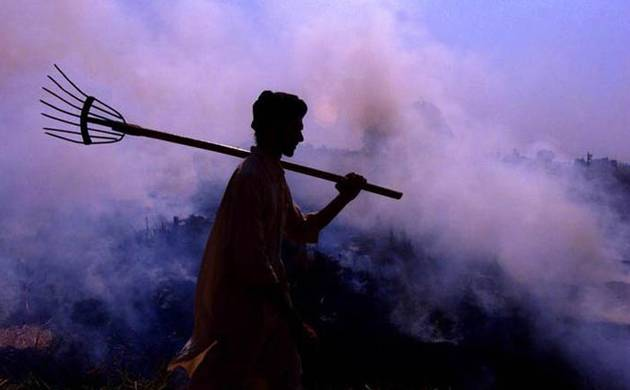 Stubble burning (File photo: PTI)