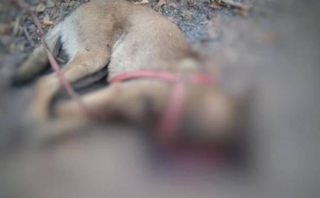 Chhattisgarh: CRPF's sniffer dog lost its life in IED blast; handler injured (Image: ANI)