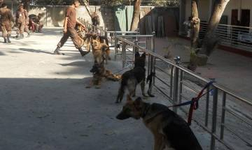 Indian Railways to begin dog breeding and training centres to raise expertise