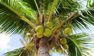 Act under which coconut palm was declassified as a 'tree' to be re-amended: Goa Minister