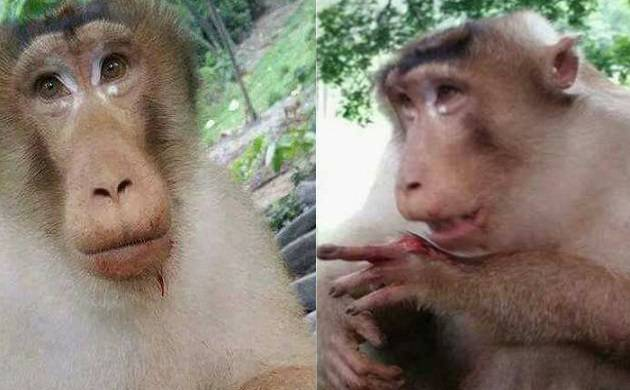 Watch: No more Humanity in India, group of people hurt innocent monkey by showing greed of food