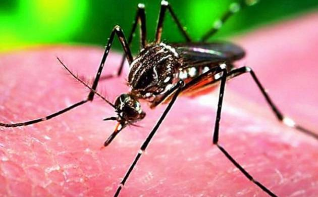 Brazil declares end to 'Zika virus' emergency