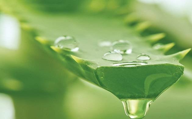Aloe vera works as great conditioner for hair, click to know some more benefits of this wonder gel