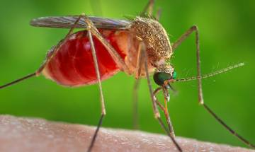 Kerala: Rise in dengue cases due to increase in population of Aides mosquito