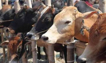 UP: Police jeep tries to save cow, kills woman, injures 3 others in Balrampur