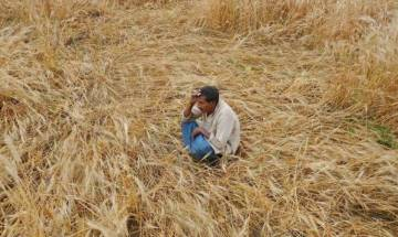 MP: One more farmer commits suicide, total toll reaches 12 in 10 days