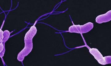 Intestinal gut bacteria may help reduce rate of ageing, says study