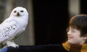 Harry Potter's 20th Anniversary: Facebook marks Magic with Harry via 6-2-4-4-2; check here