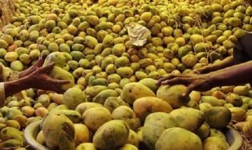70 per cent drop in mango production as compared to year 2016: All India Mango Growers Association