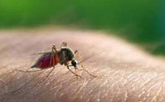 Malaria cases touch alarming 177 in Delhi this year