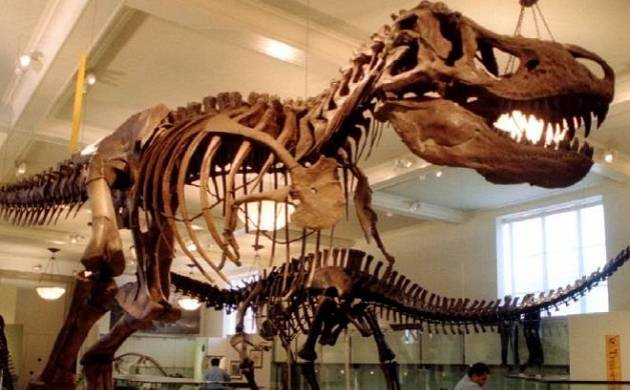 Tyrannosaurus Rex would have suffered a broken leg if ran at a fast pace (Source: PTI)