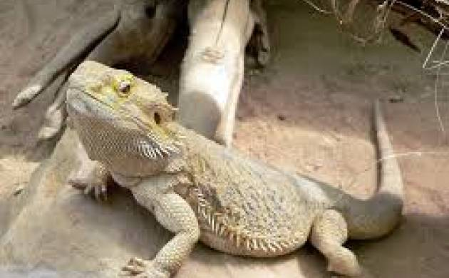 Chennai: Lizard served in an idli at Women's hostel lands 65 students in hospital