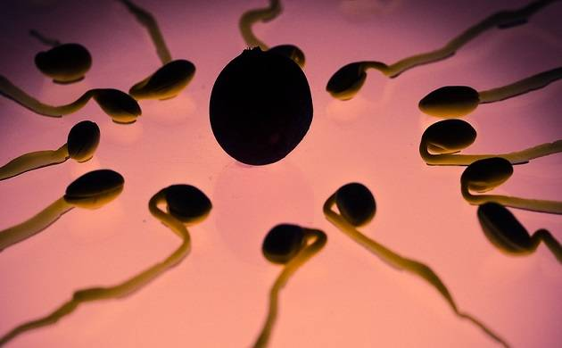 Sperm counts have declined by nearly 60 per cent in just 40 years among men living in the Western countries, according to a major review of scientific studies.