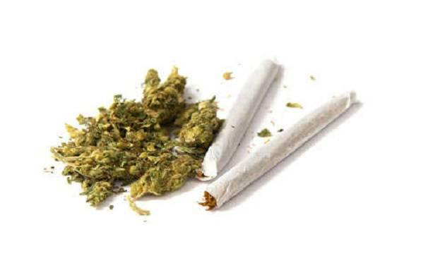 Marijuana is more dangerous than cigarettes; triple death risk from hypertension. (File Photo)