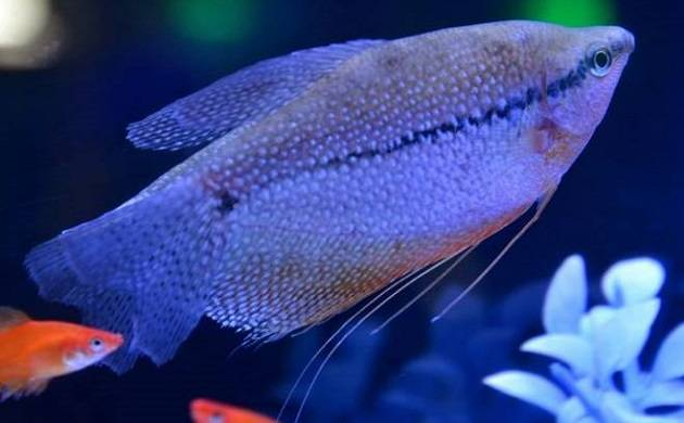 Climate change could cause fish to shrink by 30 percent, claims study