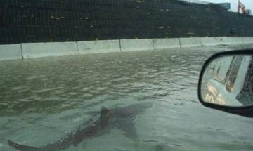Hurricane Harvey hoax: Viral photo of shark swimming in Houston flood isn't real