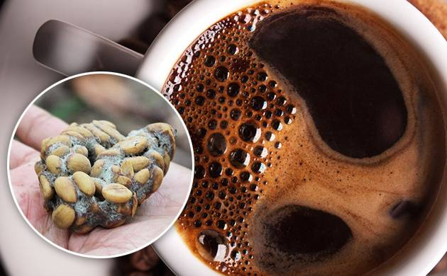 Civet coffee is considered an elite beverage meant for the elite (Agency image)