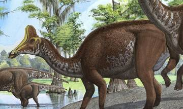 Dinosaur dung reveals plant-eating giants feasted on crabs