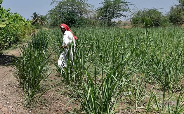 Maharashtra: Over 100 farmers seeking loan waiver have same Aadhaar number. (File Photo)