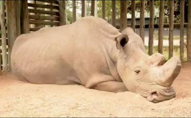 Photo of Sudan, last living male northern white Rhino shows what extinction looks like  (Image source: Twitter)
