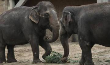 Assam: Five elephants mowed down by train in Sonitpur