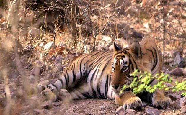 A guided cycle tour of Ranthambore to experience the confluence of history and nature, and tiger safaris are also on offer. (Source: Official site)